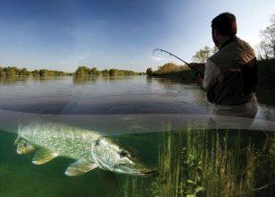 pêcheur-loire-brochet
