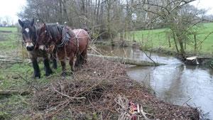 chevaux-débardent-peuplier-rivière